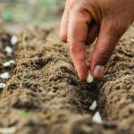 Astuces pour conserver les graines horticoles