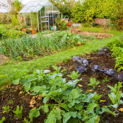 Comment aménager son jardin potager ?
